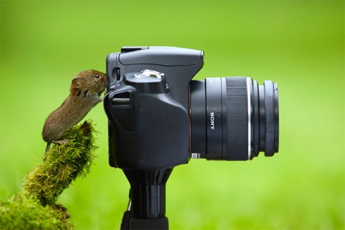 Юмор : Фото природы лапами самой природы (14 фото)