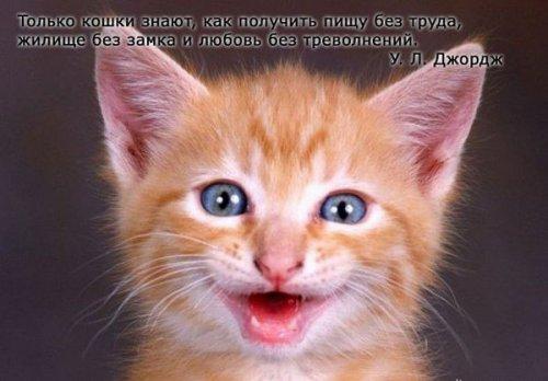 Афоризмы о кошках (20 фото)