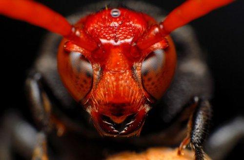 Макрофото насекомых (30 фото)