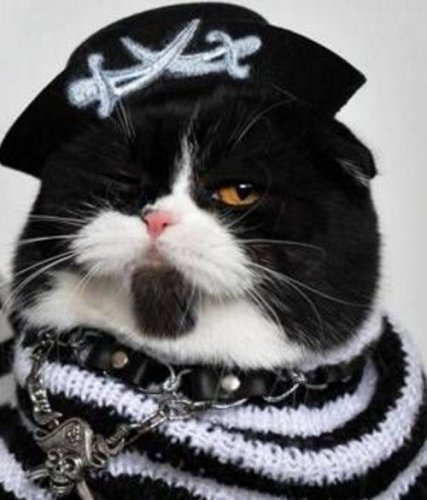 Настоящие пираты (10 фото)