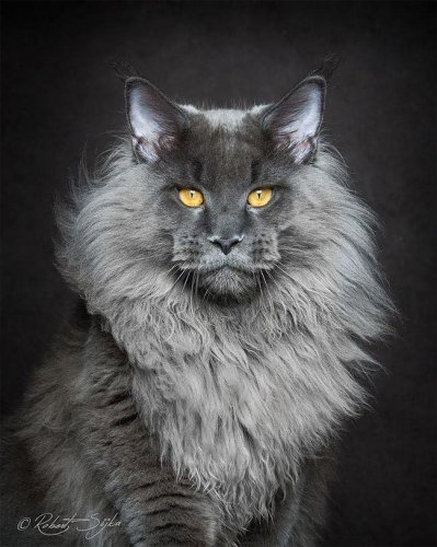 Кошки с тяжёлым взглядом (18 фото)