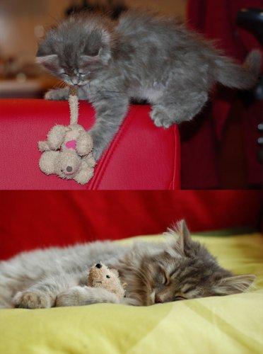Юмор : 11 симпатичных животных, которые не расстаются со своими любимыми игрушками!