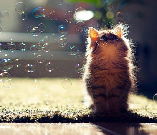 Умилительные котятки (20 фото)