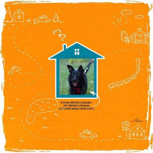 История в картинках: Возьми собаку из приюта (10 фото)