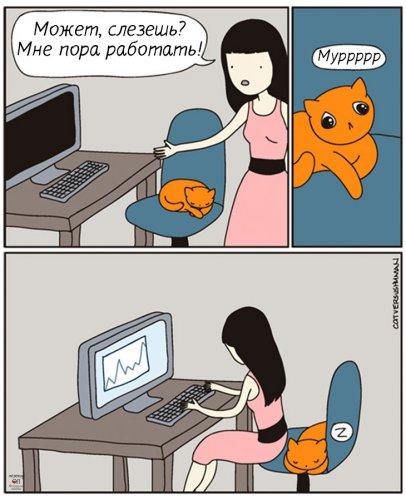 Юмор : Коты, поработившие своих хозяев