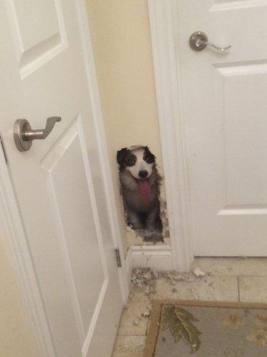 Юмор : Бесстрашные собаки в самом неожиданном месте (10 фото)