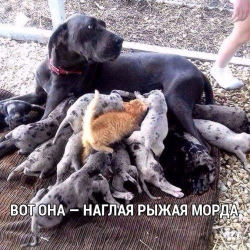 Приколы с животными (25 фото)