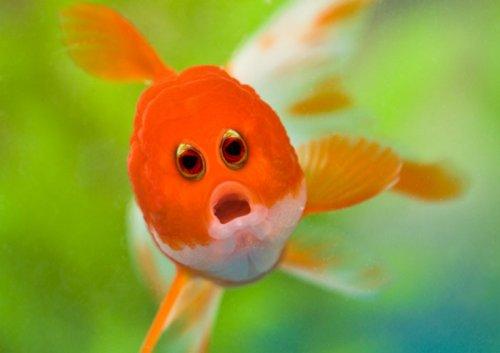 Животные с необычными глазами, какими вы их ещё не видели (17 фото)