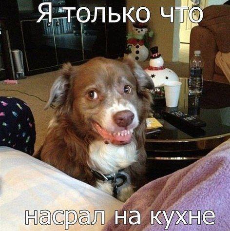 Просто для улыбки (30 фото)