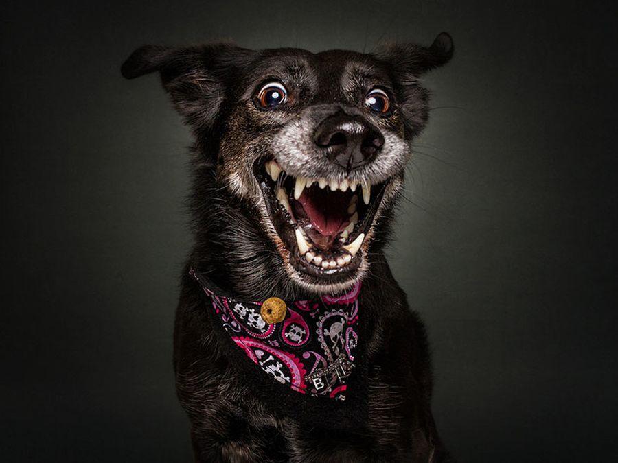 Днем, картинки прикольных псов
