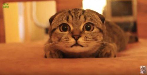 Юмор : Смешные котики