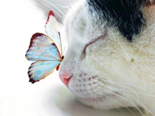 Очаровательные животные (30 фото)