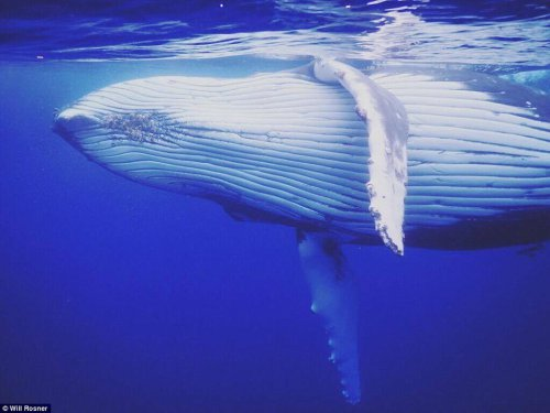 Селфи с горбатым китом (6 фото)