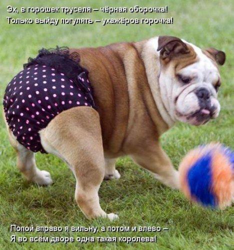 Котоматрицы про собак (30 фото)