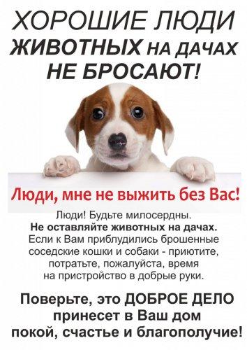 Обращение к дачникам! Не бросайте своих животных!