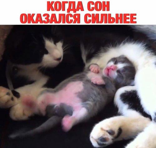 Котики,познавшие науку сна (37 фото)