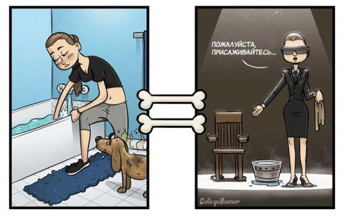 Юмор : Забавные иллюстрации о том, как собаки видят мир на самом деле (5 фото)