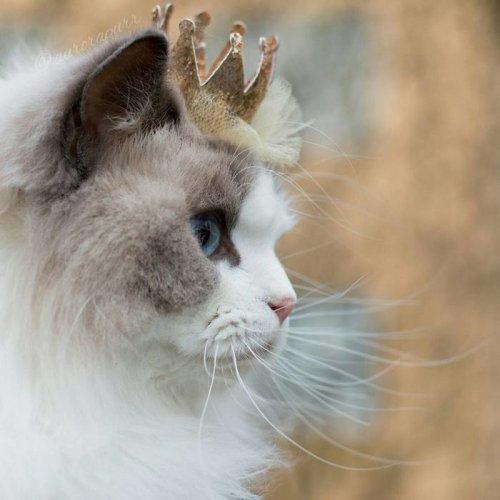 Возможно, это самая красивая кошка в мире (7 фото)