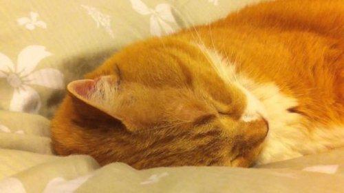 Кот своим храпом разбудил всех