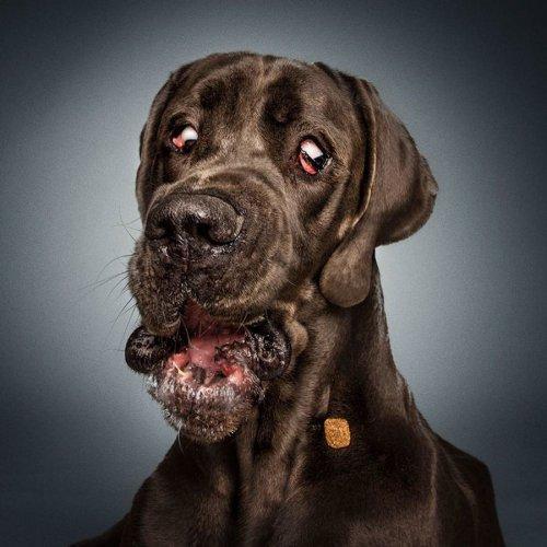 Забавные фотографии собак от фотографа Christian Vieler (16 фото)