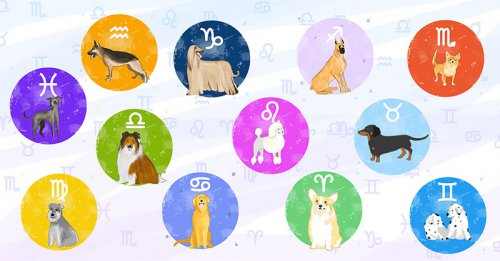 Юмор : Этот щенячий гороскоп настолько точен, что даже страшно!