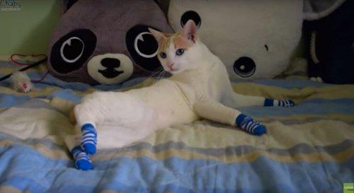 Юмор: Кошка в носках