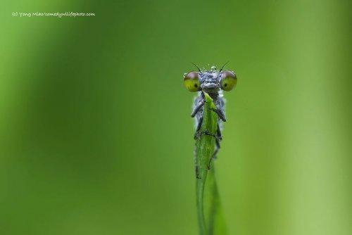 Весёлые фотографии, присланные на конкурс Comedy Wildlife Photography Awards (18 фото)