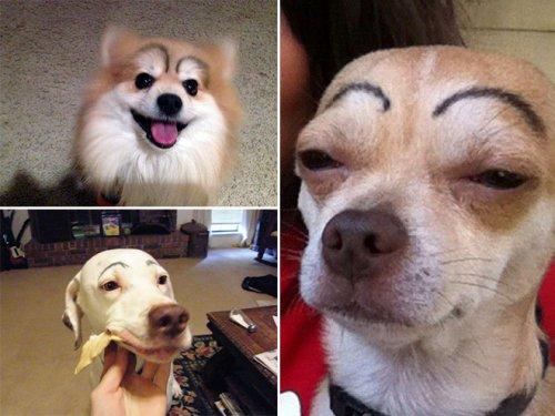 Собаки с бровями (15 фото)