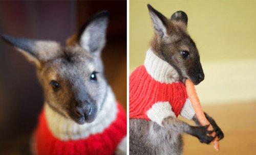 Зверушки в вязаных свитерах (37 фото)