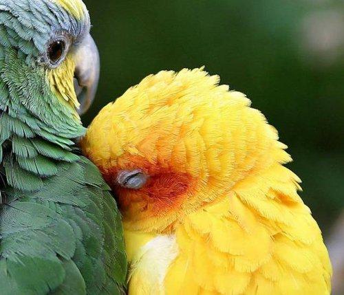 Очень познавательно: Интересные факты о животных в цифрах