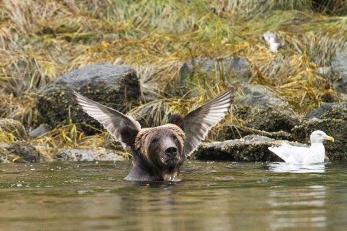 25 несерьёзных фотошедевров конкурса 2016 Comedy Wildlife Photography Awards