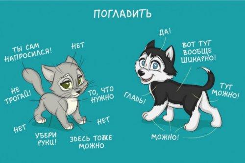 Как отличается жизнь с кошкой и жизнь с собакой (14 фото)