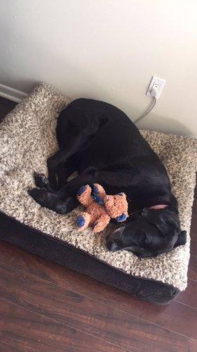 Собаки видят сны о своих хозяевах (3 фото)