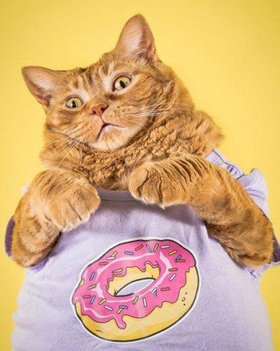 Милые толстые котики (18 фото)