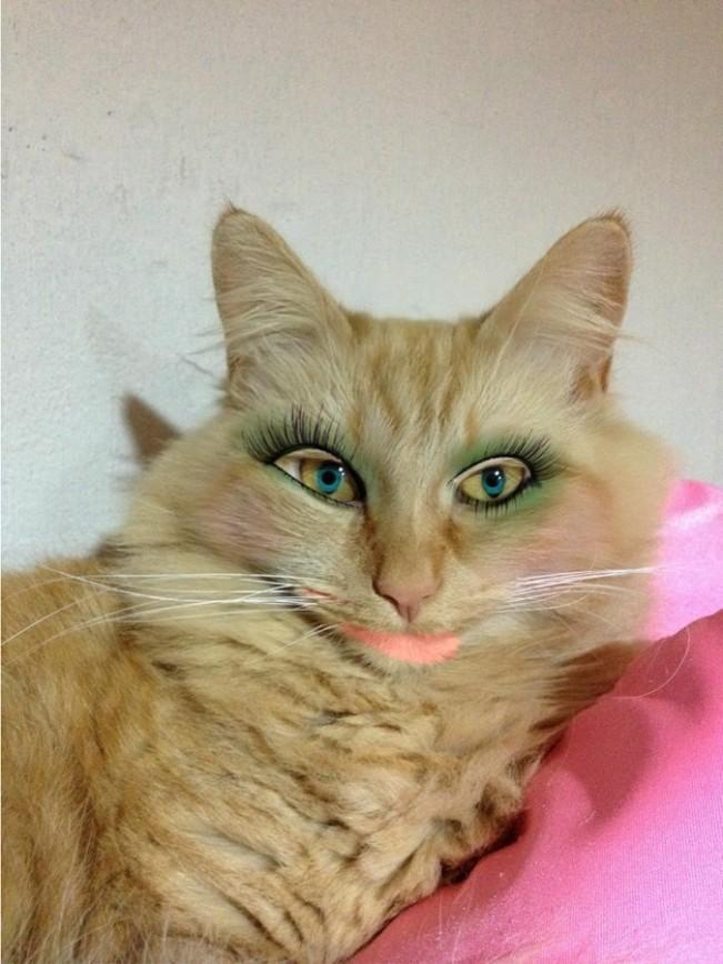 мастер-класс кошку накрасили картинки ювелирном деле применяют