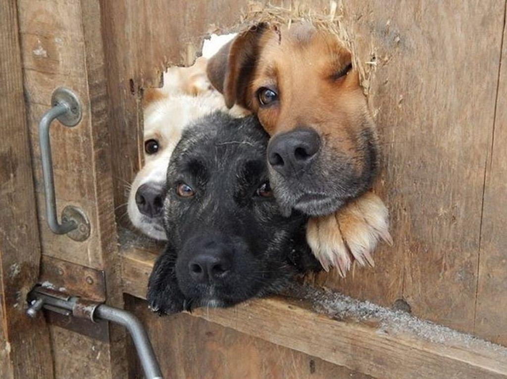 Почему все собаки одновременно лают