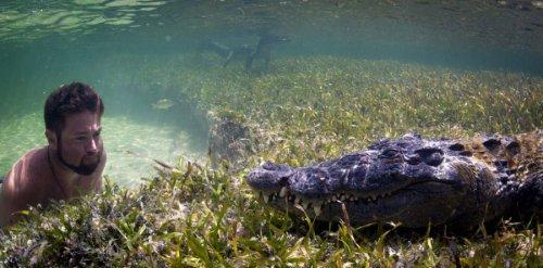 Заплыв с крокодилом (9 фото)