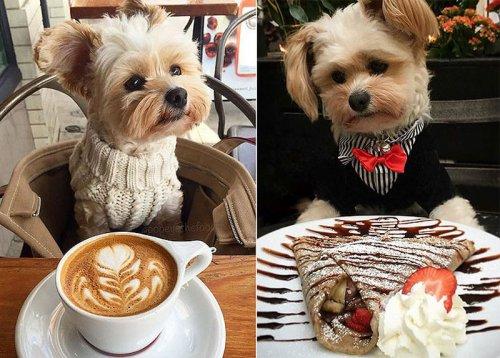Бывший бродячий пёс теперь ходит по лучшим ресторанам (2 фото)