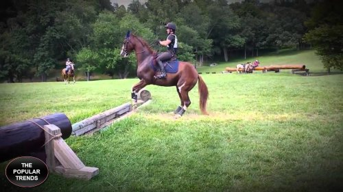Юмор : Почти изящно: эта лошадка придумала новый способ преодоления препятствий!
