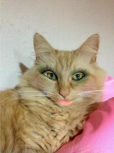 Кошке - тени, собаке - помаду (12 фото)