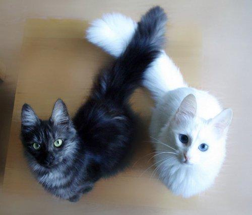 Чёрные и белые котики (18 фото)