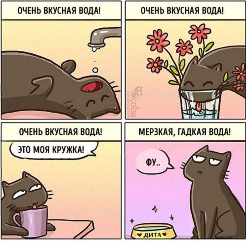 Как меняется жизнь с появлением в доме кота (20 фото)