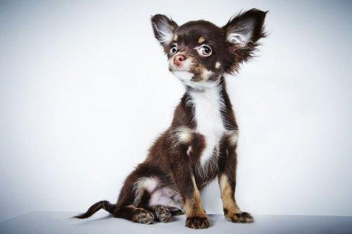 Фотохудожник помогает собакам-инвалидам найти новых хозяев (26 фото)