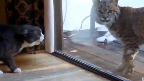 Незваный гость
