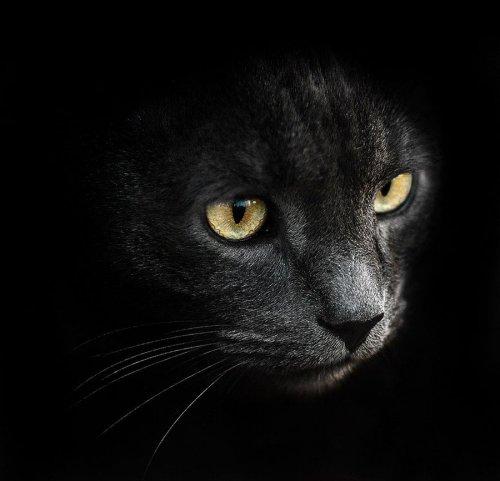 Впечатляющие портреты животных от Сергея Полюшко (27 фото)