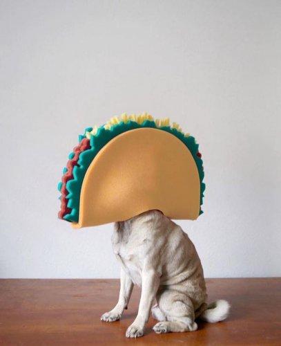 Простые радости забавного мопса (22 фото)