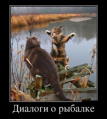 Демотиваторы для настроения! (30 фото)