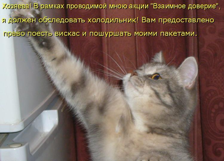 Картинки смешные про кошек в стихах