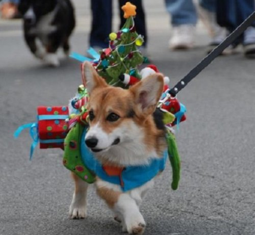 Новогодние собаки-ёлки:)(10 фото)