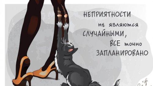 Юмор: Что должна уметь воспитанная кошка.